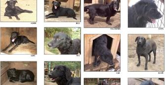 Az elfeledett fekete kutyák